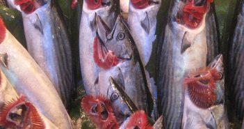 balığın taze olup olmadıgını nasıl anlarız